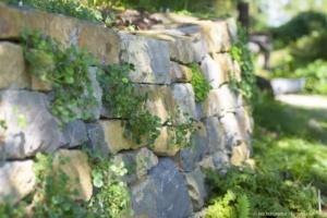 Der Gartenarchitekt gestaltet natürliche Zukunft